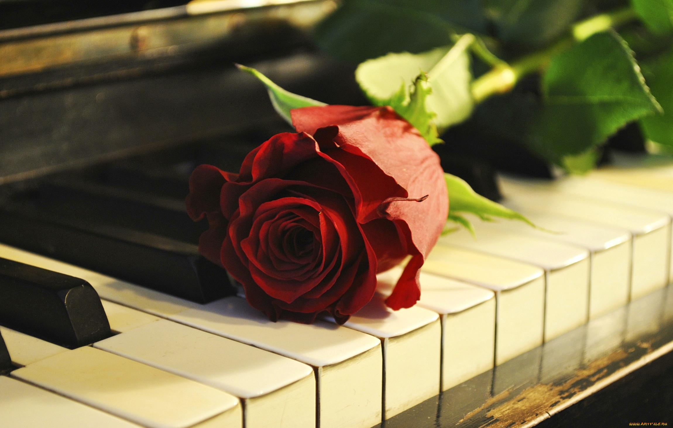название картинка розы и клавиши электронной